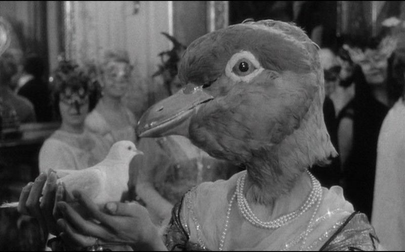 judex birdhead